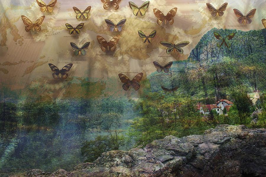 Bird-Wing Butterflies (2013) by Glynnis Reed (Ryman '93)