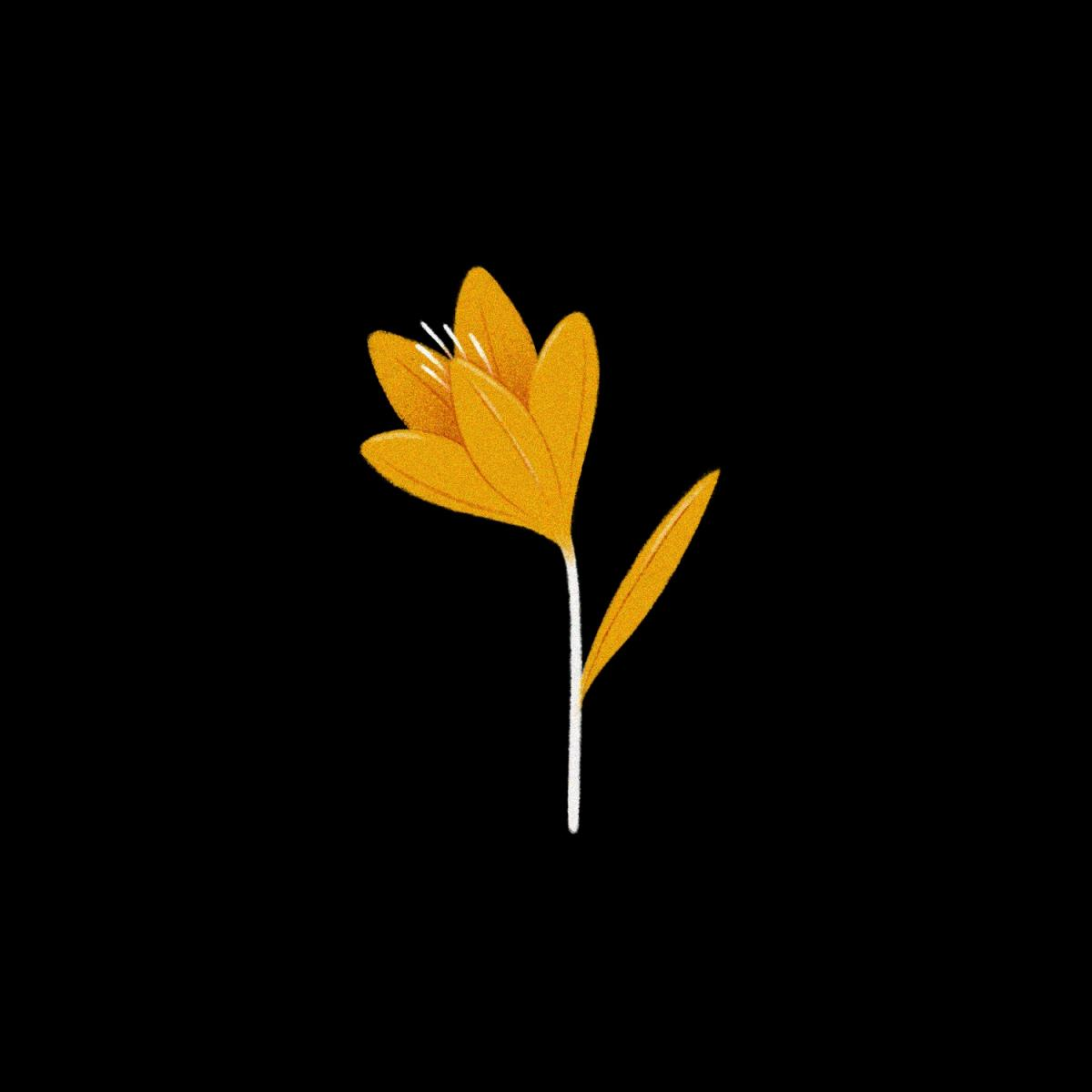 Artwork of yellow flower in black background by Maggie Chiang (Ryman '09)